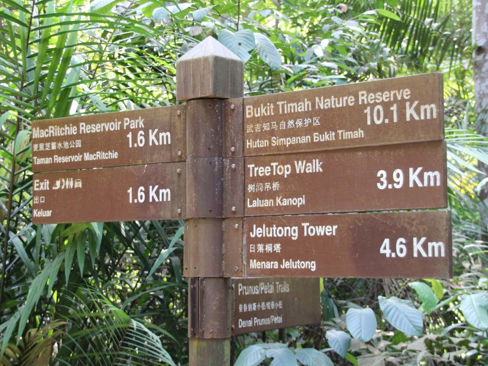 Mac Ritchie Nature Trail in Singapore