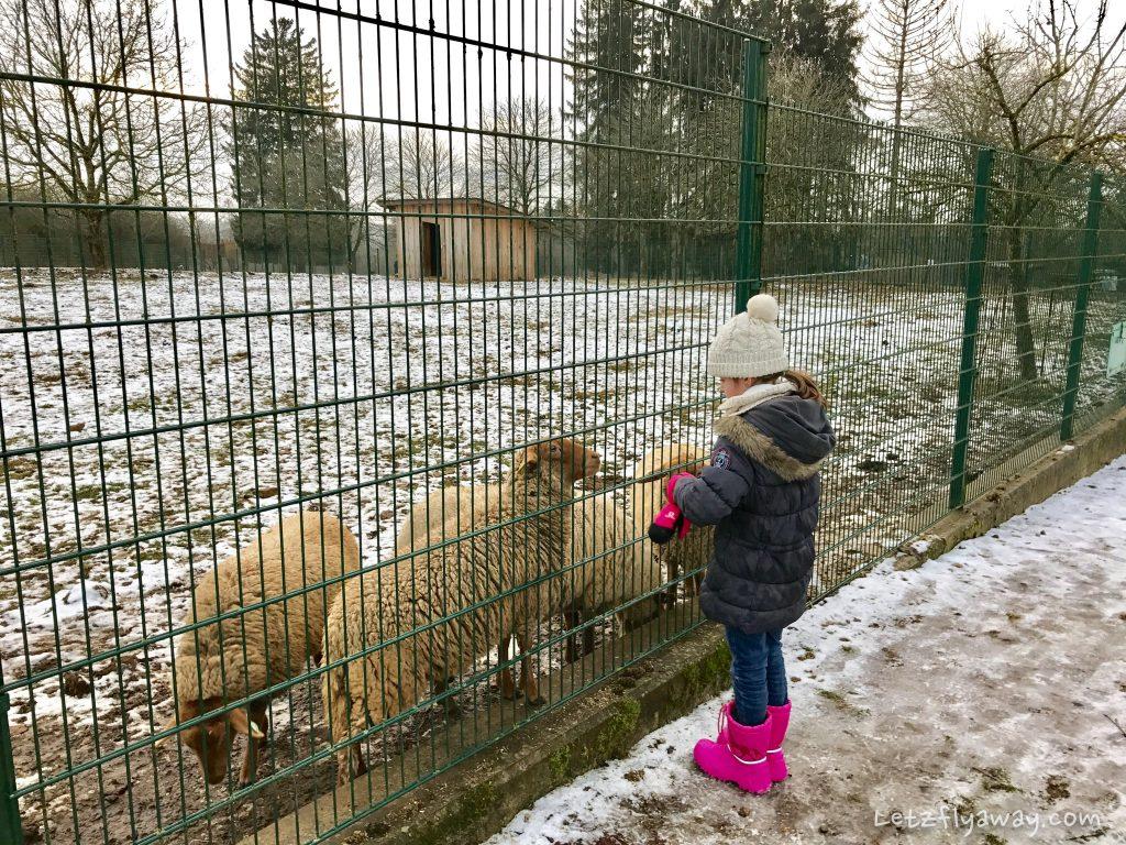 Déirepark Esch Gaalgebierg feeding animals