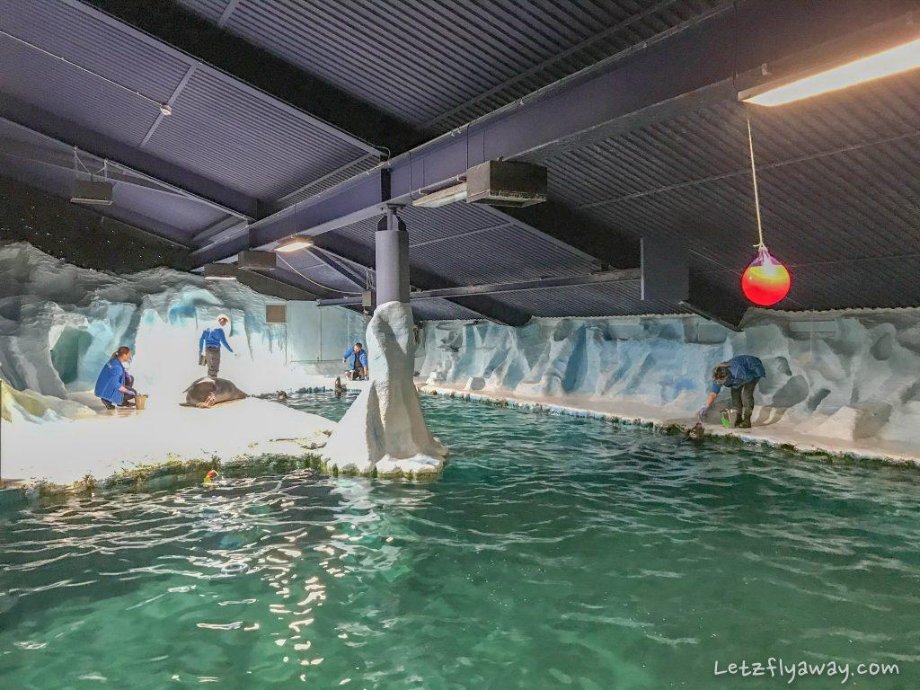 Polaria seal training