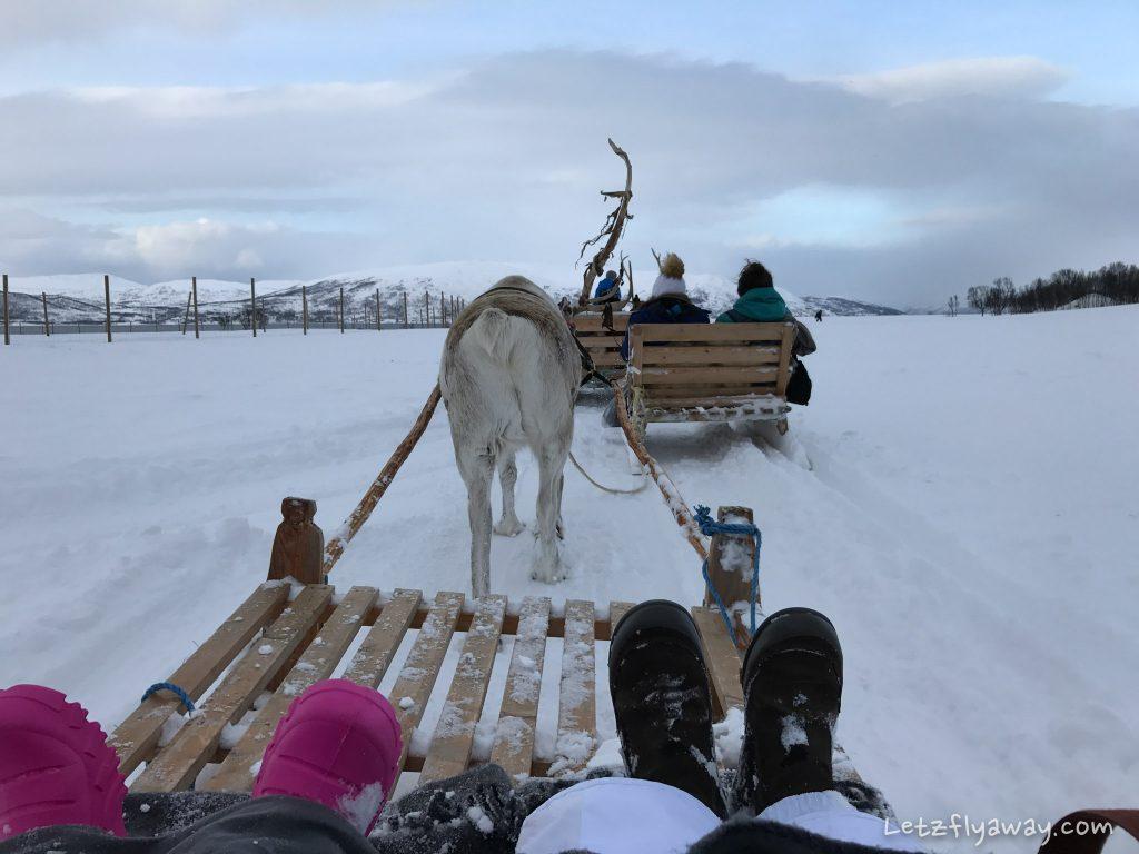 Tromso arctic reindeer sleigh ride