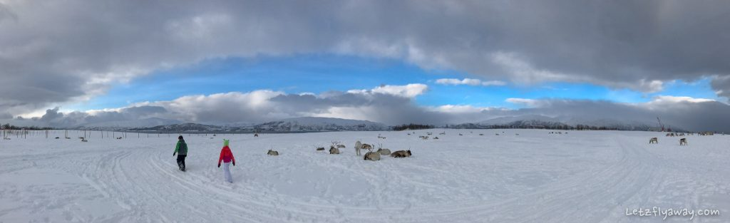 Tromso arctic reindeer camp with kids