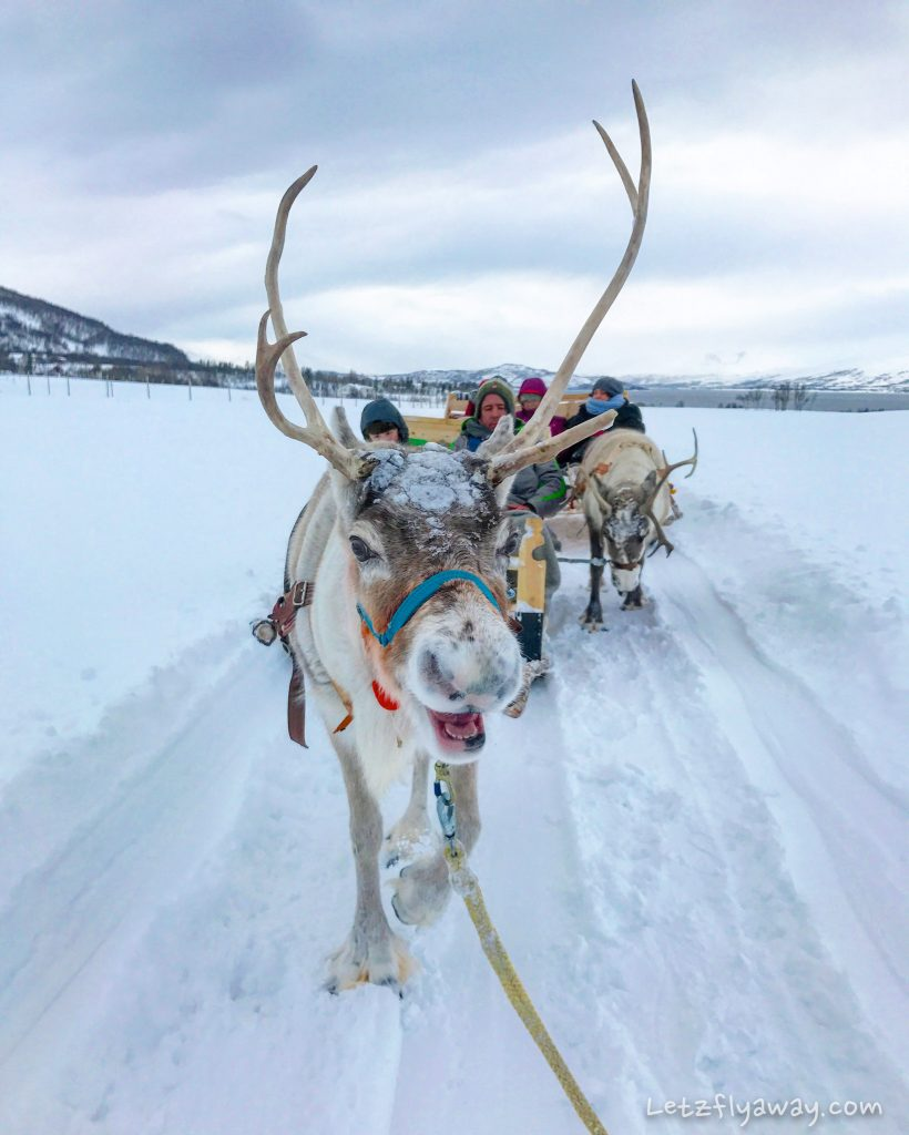 Tromso Arctic reindeer sledding experience with children