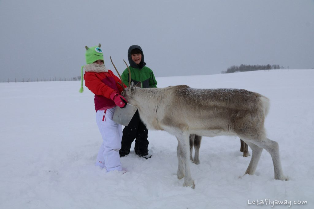 Tromso with Kids Feeding reindeers
