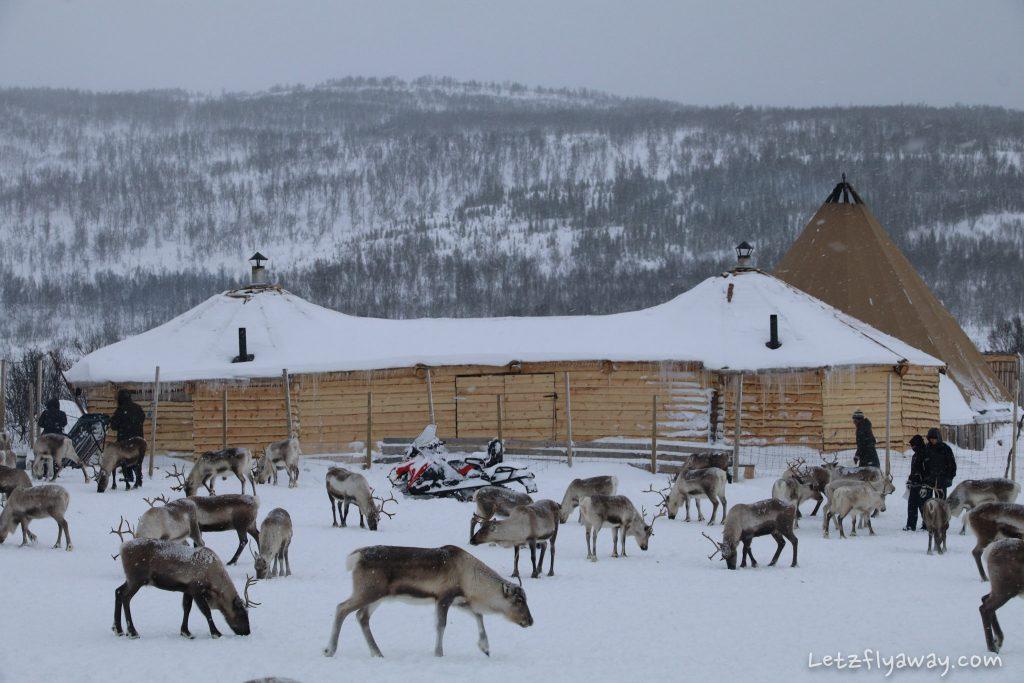 Tromso Arctic Reindeer Camp