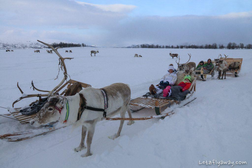 Tromso with Kids Arctic Reindeer Sledding