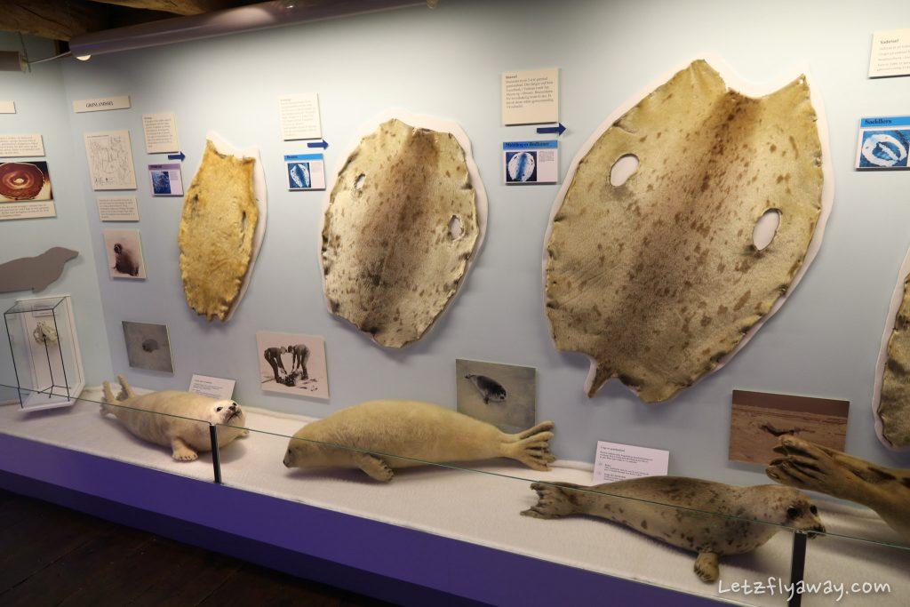 polar museum exhibit