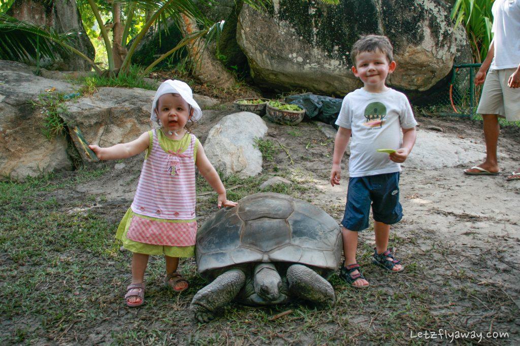 Constance Ephelia Resort tortoise feeding