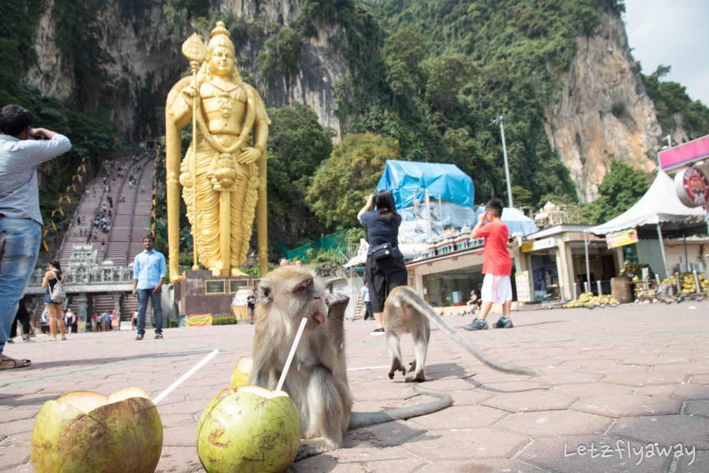 batu caves monkeys