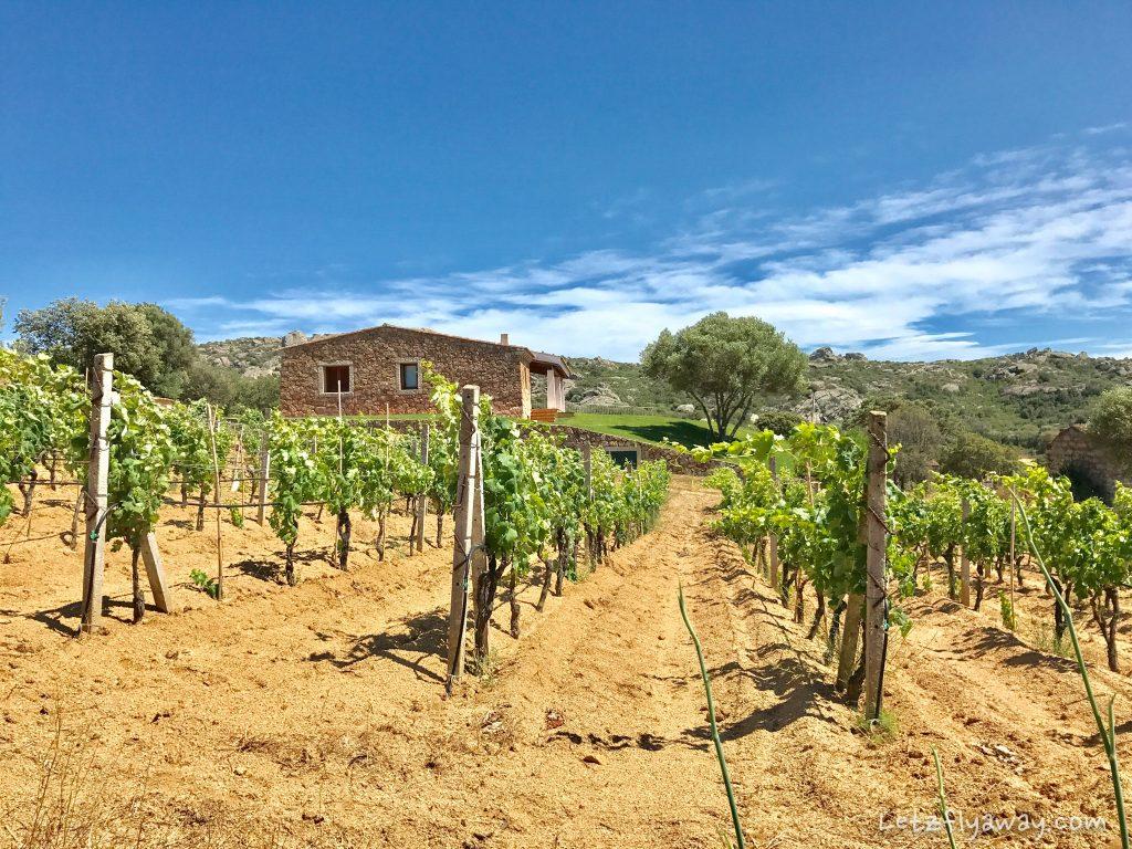 sardinia vineyards