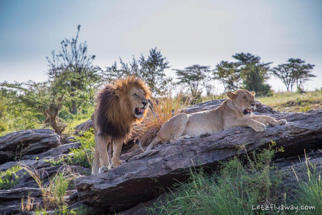 motorogi conservancy lions