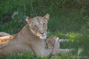 Kenya safari with kids