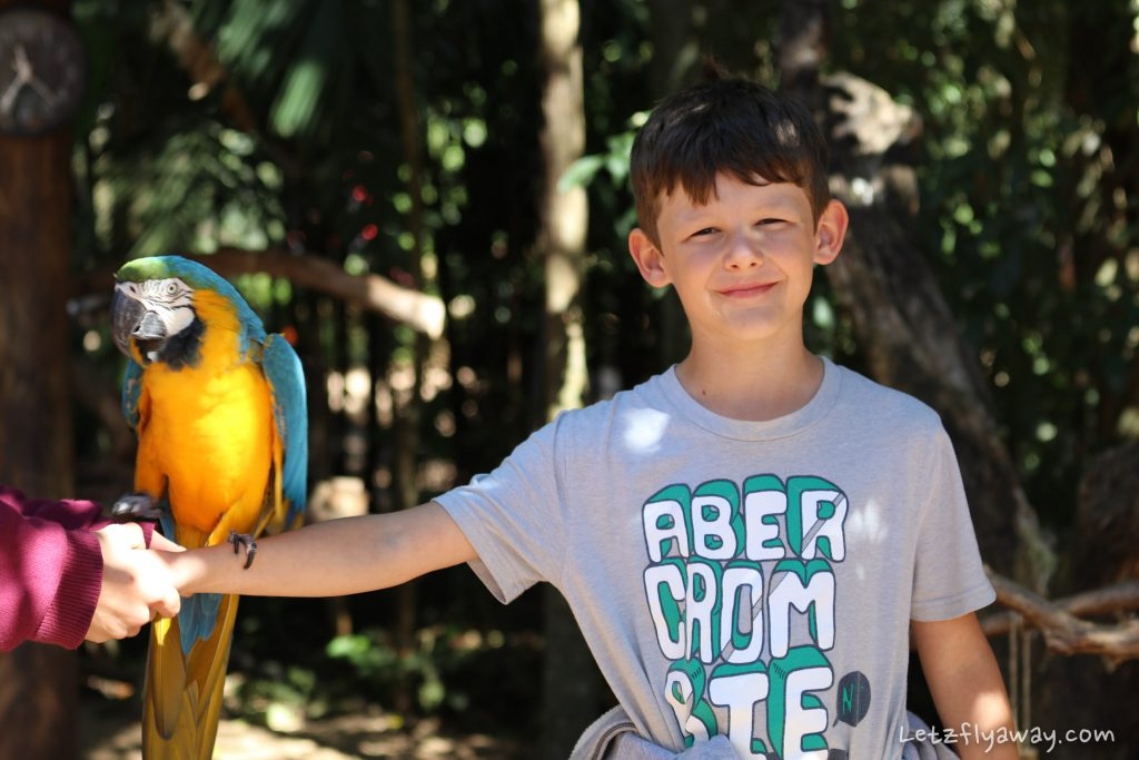 parque das aves with kids