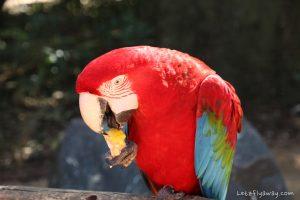 Iguazu Falls wildlife