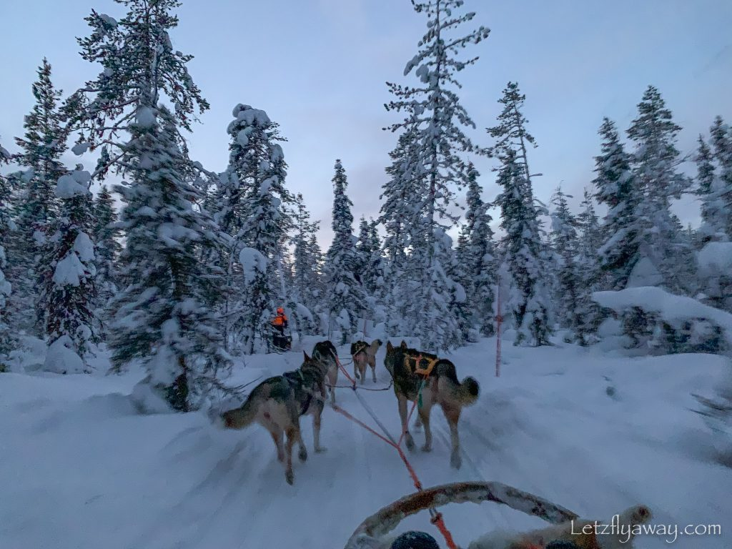 tundra huskies safari