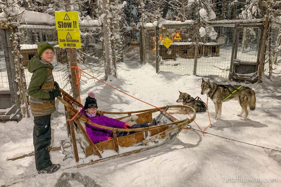 tundra huskies