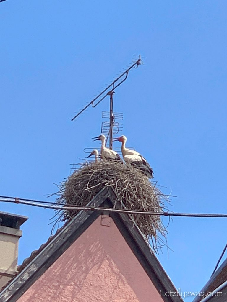 storks in eguisheim A weekend in Alsace