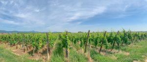 A weekend in Alsace Vineyard