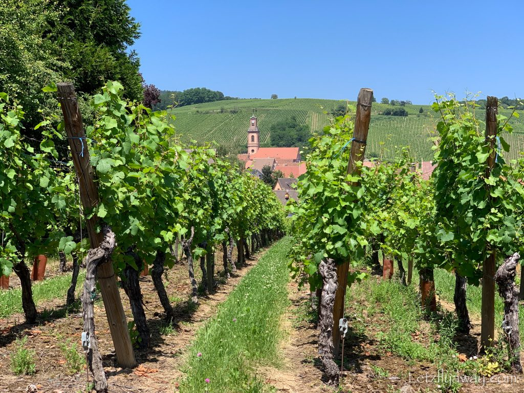 Vineyard in Riquewihr